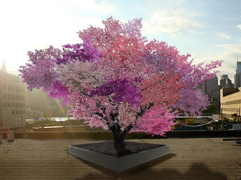 """Sam Van Aken's grafted fruit trees are still quite young, but this artist rendering shows what he expects the """"Tree of 40 Fruit"""" to look like in springtime in a few years. Courtesy of Sam Van Aken"""