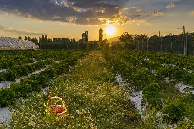 strawberry fields BE STILL